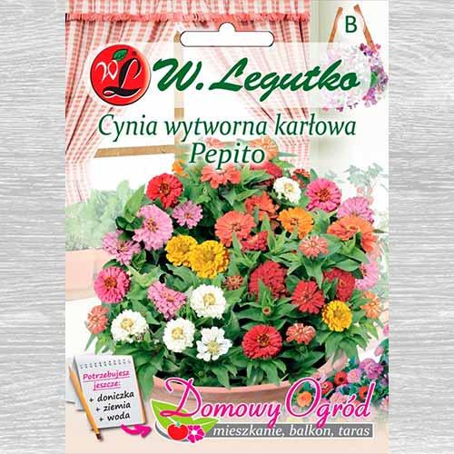 Zinnia Pepito, mix multicolor imagine 1 articol 69659