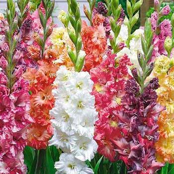 Bulbi de flori de primăvară