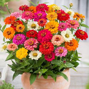 Semințe de flori