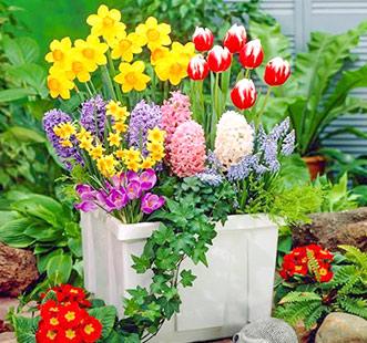 Bulbi de flori de toamnă